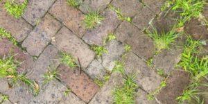 бруківка догляд від рослин